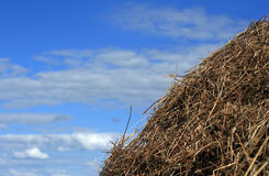 Yellow stack of straw Royalty Free Stock Photo