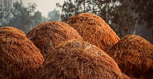Stack of straws isolated natural object. The typical natural stack of straws isolated object captured from a rural place Royalty Free Stock Photo