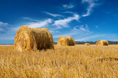 Yellow stacks in the field against the blue sky in a sunny day Royalty Free Stock Image