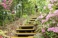 Yellow stair case with pink azalea flowers in the mountain. Forest stock photography