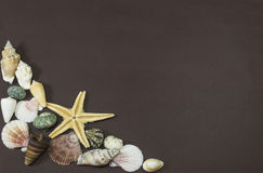 Yellow star fish and sea shells Royalty Free Stock Images