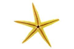 Yellow starfish Stock Images