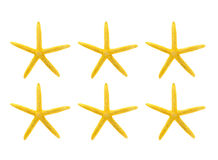 Yellow starfish against white background Stock Images