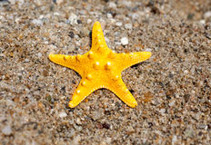 Yellow Starfish on the Beach Royalty Free Stock Image