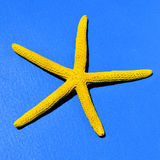 Yellow starfish on a blue background Stock Photo