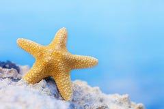 Yellow starfish Stock Photo