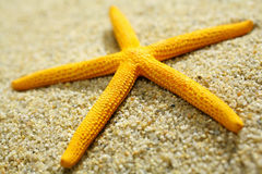 Yellow starfish on a sandy beach Royalty Free Stock Photo