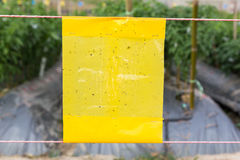 Yellow sticky trap in agriculture field for insect control Royalty Free Stock Image