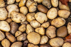 Yellow stone Royalty Free Stock Photos