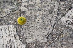 Yellow Stone road Stock Photo