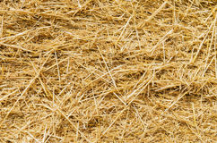 Yellow straw as background Stock Photography