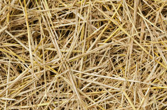 Yellow straw as background Royalty Free Stock Images