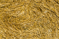 Yellow straw in a bale close up Stock Photo