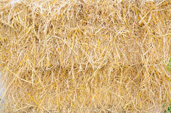 Yellow straw bale wall Royalty Free Stock Images