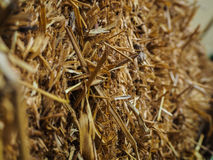 Yellow straw in farm Stock Photography