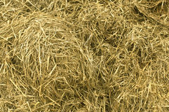 Yellow straw pile. Royalty Free Stock Image