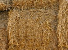 Yellow straw is pressed into bales .Texture or background. Yellow straw is pressed into huge round bales .Texture or background royalty free stock images