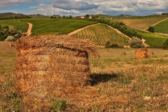 Yellow straw roll on field. Yellow straw roll on field in front of vineyard slope Stock Photos