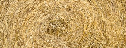 Straw roll texture, panorama background. Yellow straw round bale texture golden background, panorama, close-up royalty free stock photo
