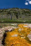 Yellow stream. In Yellowstone National Park Royalty Free Stock Photography