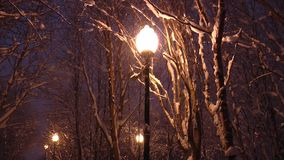 Yellow street lamp among the snowy branches. stock footage