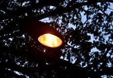 Yellow streetlights with dark background photograph stock photo