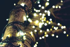 Yellow String Lights on Brown Tree Stock Photos