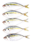 Yellow stripe trevally fish Stock Photography