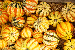 Yellow striped carnival dumpling squash Royalty Free Stock Photo