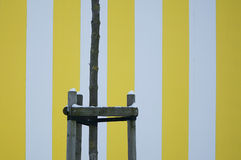 Yellow striped wall texture Stock Images