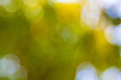Yellow summer blur background Stock Photo