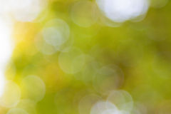 Yellow summer blur background Royalty Free Stock Images