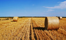 Yellow summer field with hays.  Royalty Free Stock Photo