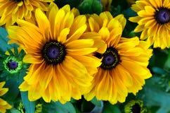 Yellow summer flower Stock Photo