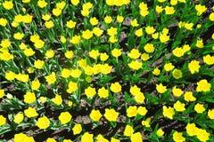 Yellow summer flowers Stock Photos