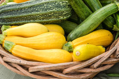Yellow summer squash on display in baskets Stock Images