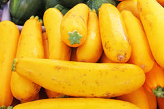 Yellow Summer Squash vegetable Stock Images