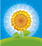 Yellow sunflower. Colour illustration of yellow sunflower Royalty Free Stock Photos