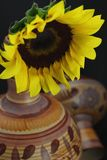 Yellow Sunflower. Mexican design pottery black background royalty free stock image