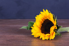 Yellow sunflower on against a rustic background Royalty Free Stock Photography