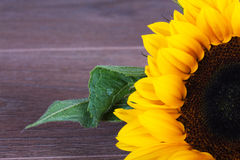 Yellow sunflower on against a rustic background Stock Photography