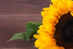 Yellow Sunflower On Against A Rustic Background Bright