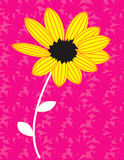 Yellow sunflower in bloom. Illustration of yellow sunflower in bloom with abstract pink background Royalty Free Illustration