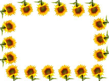Yellow sunflower border Stock Images