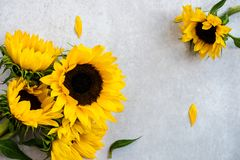 Yellow Sunflower Bouquet on Grey Background, Autumn Concept Stock Images