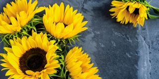 Yellow Sunflower Bouquet on Grey Grunge Background, Autumn Conce Royalty Free Stock Image
