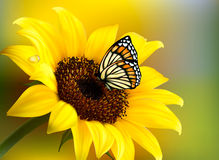 Yellow sunflower with a butterfly. Vector Stock Photos