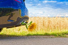 Yellow sunflower in a exhaust Stock Photography