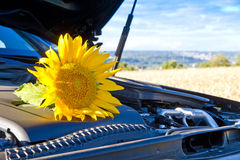 Yellow sunflower on a motor Royalty Free Stock Photos