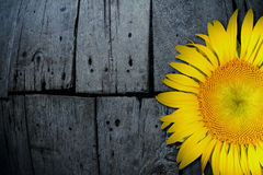 Yellow sunflower on old textured wooden floor background Stock Images